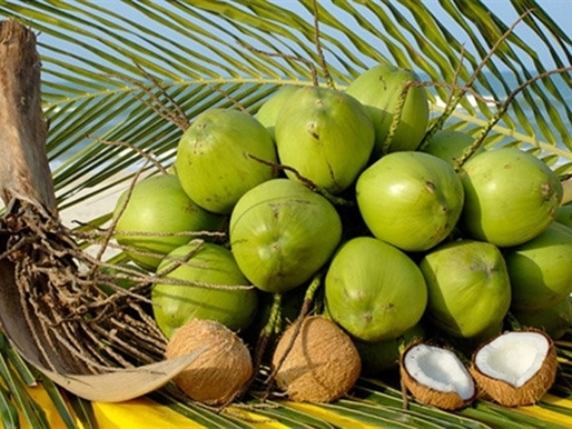 Dừa tươi Bến Tre được đóng hộp xuất khẩu ra nước ngoài