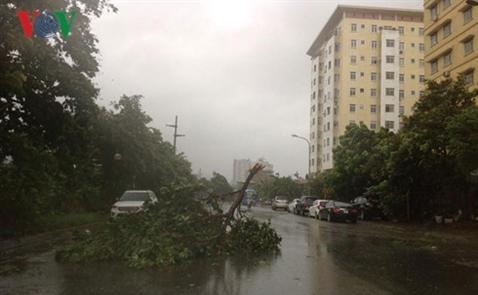 Bão số 1 giật đổ hơn 600 cây xanh ở Hà Nội, 1 người chết