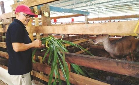 Nai Cư Êbur mở đường vào siêu thị