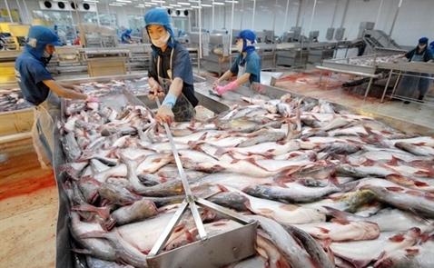 Lấy lại 'danh dự' cho cá tra Việt