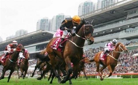 Dự án trường đua ngựa 500 triệu USD tại Hà Nội tái khởi động