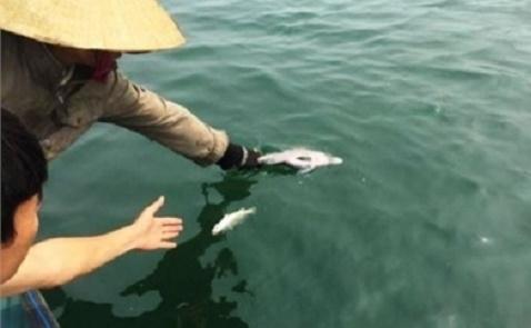 Phát hiện 9 mẫu cá, ghẹ Hà Tĩnh nhiễm độc