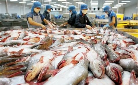 Xuất khẩu cá tra Việt Nam sang ASEAN chững lại