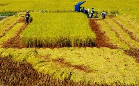 Tăng trưởng ngành nông, lâm, thủy sản thấp nhất 6 năm