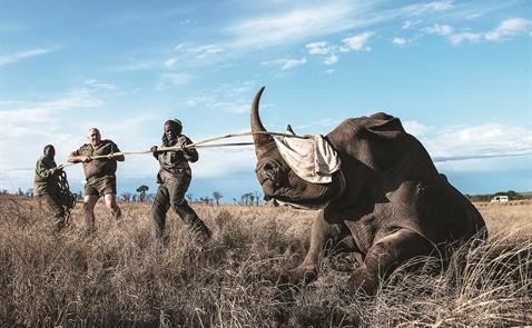 Sừng tê giác: Quá đắt, quá nguy hiểm!