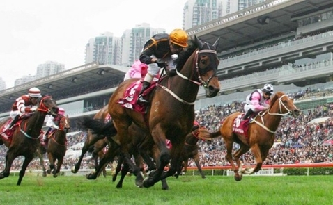 Hàn Quốc muốn xây trường đua ngựa 500 triệu USD tại Bắc Ninh