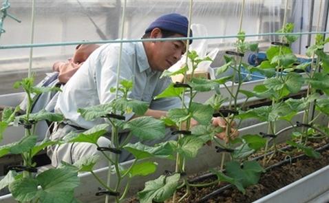 Xuất ngoại làm nông lương ngàn USD