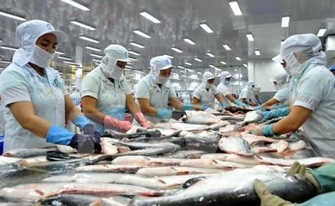 VASEP: Giá cá tra bắt đầu tăng