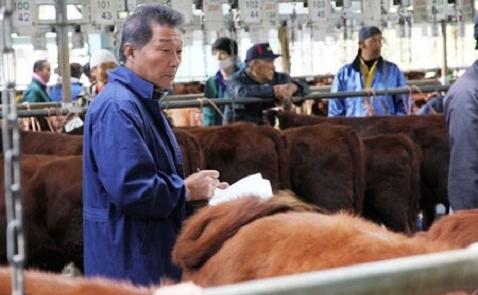 Nhật Bản tính nuôi bò thịt quy mô lớn tại Việt Nam