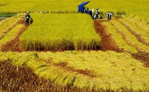 Nông nghiệp mới chỉ chiếm 1% vốn FDI vào Việt Nam