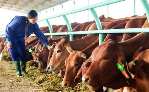 Nông nghiệp Hoàng Anh Gia Lai lỗ 643 tỷ đồng sau 9 tháng