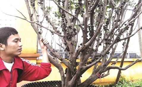Từ cây lên kiểng