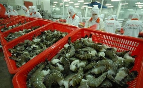 EU nghi ngờ tôm nhập khẩu từ Việt Nam có xuất xứ Ấn Độ