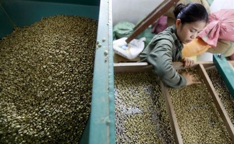 Giá cà phê trong nước lên cao kỷ lục