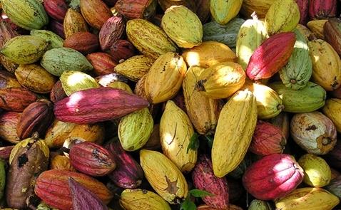 Phát lệnh tạm ngừng nhập khẩu một loạt nông sản Indonesia