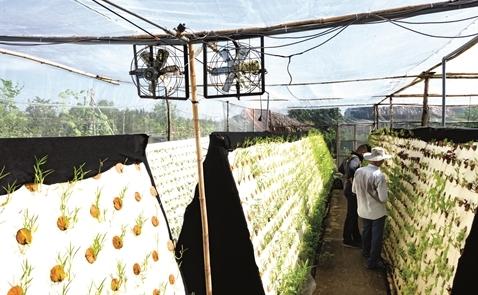 Đâu là mô hình nông nghiệp công nghệ cao cho 2017?