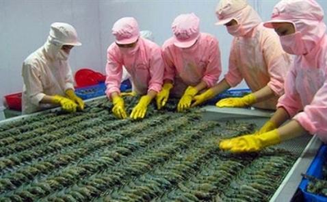 Doanh nghiệp Việt có thể thiệt hại hàng triệu đôla khi Úc cấm nhập tôm