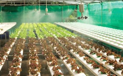 4,4 tỷ USD có cứu được nông nghiệp công nghệ cao?