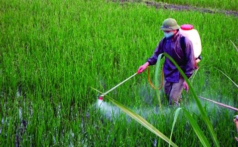 Châu Âu sẽ giảm dư lượng tricyclazole cho phép trong gạo