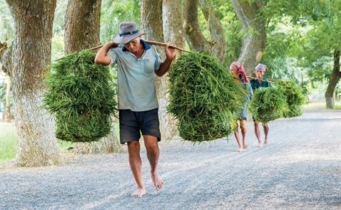 Việt Nam đứng trước nguy cơ