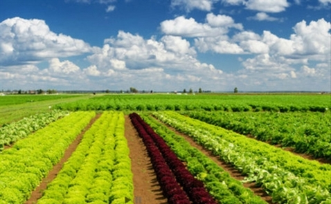 IFC đầu tư 230 tỷ đồng vào PAN Farm