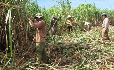 Hoàng Anh Gia Lai vẫn chưa chốt xong thương vụ bán mía đường