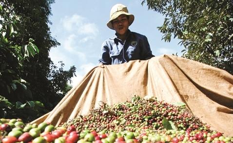 NutiFood và giấc mơ ngàn tỉ nâng giá cà phê việt