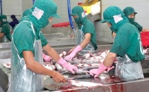Giá cá tra nguyên liệu