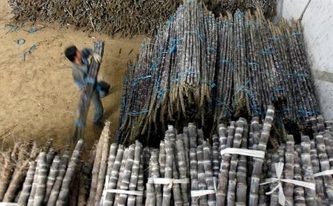 Trung Quốc sẽ tăng gấp đôi thuế nhập khẩu đường