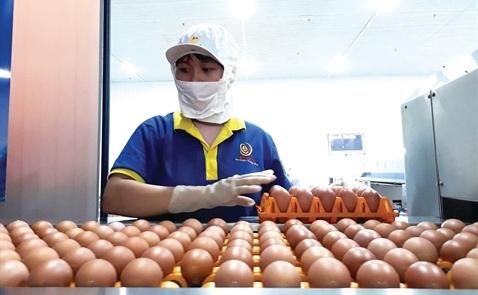 Ba Huân: Lấy trứng chọi trứng