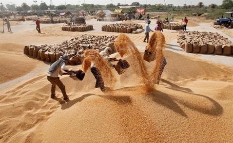 Giá gạo Việt Nam tiếp tục giảm