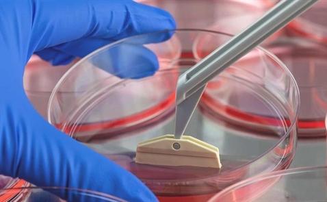Cơ hội cho điều trị tế bào gốc ở Việt Nam