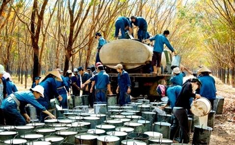 Tập đoàn cao su Việt Nam dự thu 12.800 tỷ đồng từ cổ phần hoá