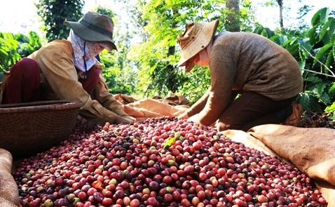 Thị trường cà phê tiếp tục ảm đạm