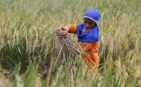 Nông dân châu Á không thể đáp ứng đủ nhu cầu lương thực khu vực