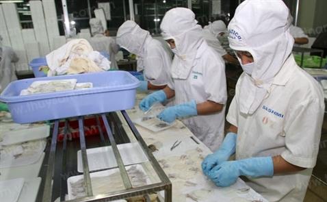 Xuất khẩu mực, bạch tuộc sang Trung Quốc tăng mạnh