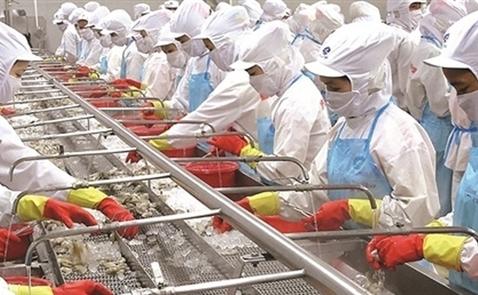 Thủy sản Minh Phú lãi gần 558 tỷ đồng trong 10 tháng