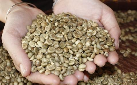 Giao dịch cà phê trầm lắng trước kỳ vọng được mùa giảm giá