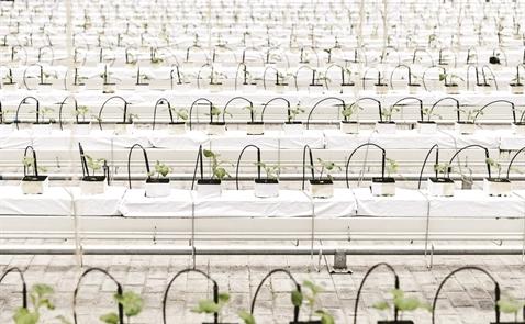 Trung Quốc trước bài toán khủng hoảng lương thực