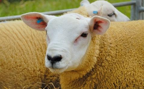 Có thể thịt cũng phải chịu thuế tiêu thụ đặc biệt?