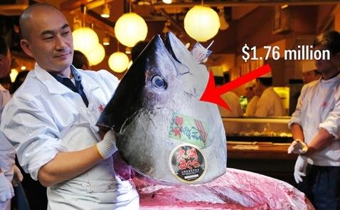 Bên trong chợ cá lớn nhất thế giới, nơi một con cá ngừ có giá 1,7 triệu USD
