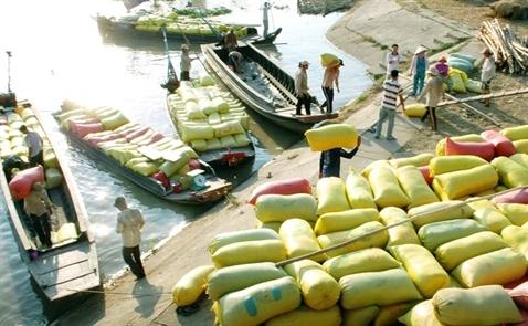 Vượt qua Thái Lan xuất khẩu gạo Việt xác lập đỉnh cao mới