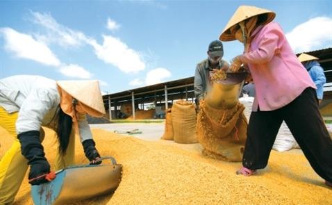 T&T muốn rót nghìn tỷ đồng vào Lương thực miền Nam