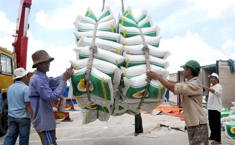 Xuất khẩu gạo tháng 1 đạt mức 486,2 USD/tấn, tăng 13,6%