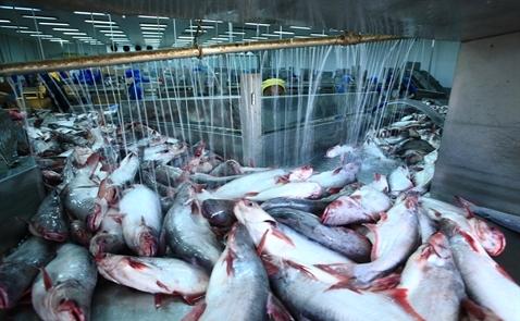 Nỗ lực cứu xuất khẩu thủy sản trước