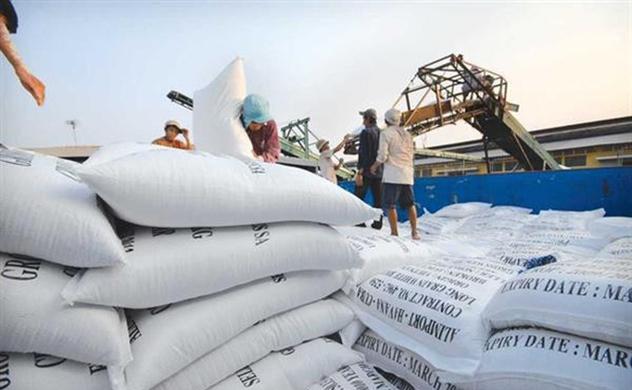 Gạo Việt trúng thầu vào Philippines