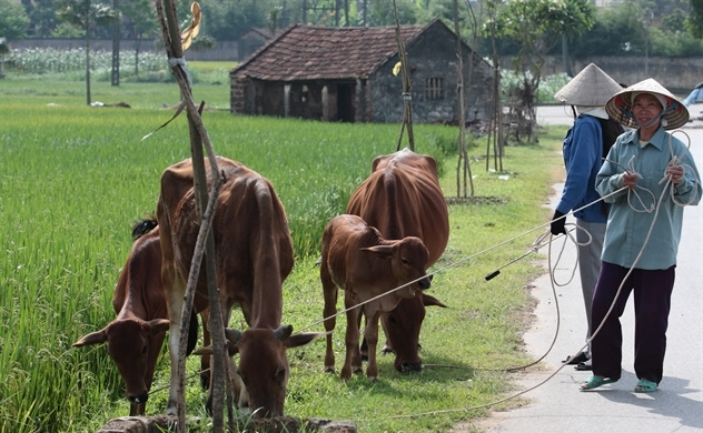 Tái cơ cấu nông nghiệp: Làm gì để người nông dân ly nông bất ly hương?