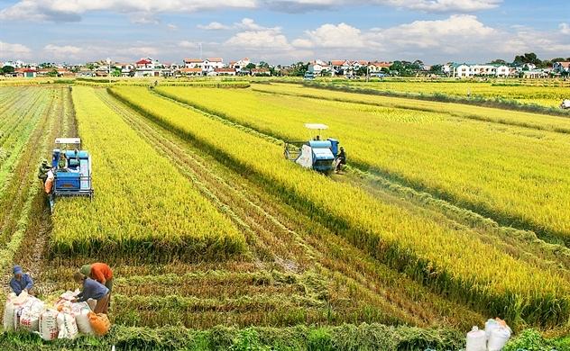 Nông nghiệp tăng tốc tìm vốn