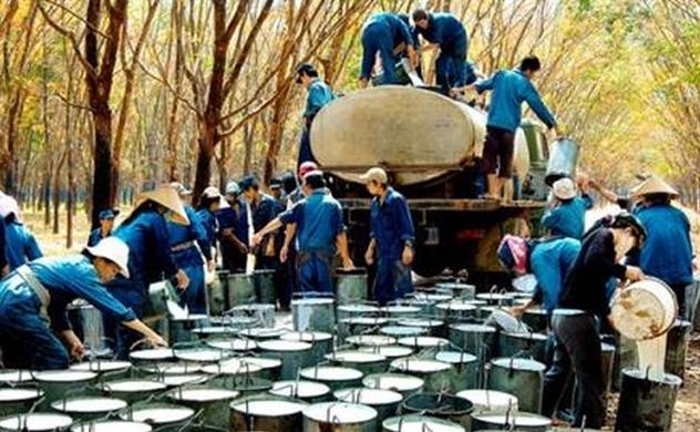 Tập đoàn Cao su Việt Nam lần đầu tổ chức đại hội cổ đông
