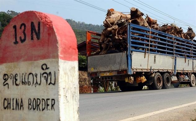 Lào: Triệu voi gục ngã vì nợ của Trung Quốc